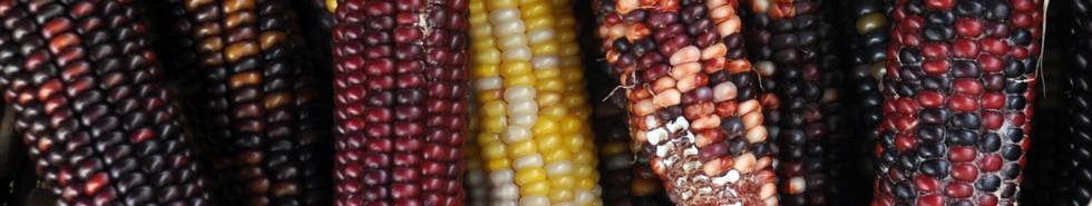 Multicolor-Corn-Banner