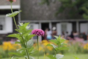 Image of flowers blooming in front of the Wyckoff farmhouse