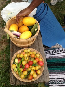 Tomatoes, cucumbers, and other crops harvested from the Wyckoff House Museum's urban farm